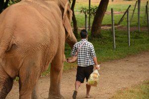 guardien bananes_ENP_Thailande