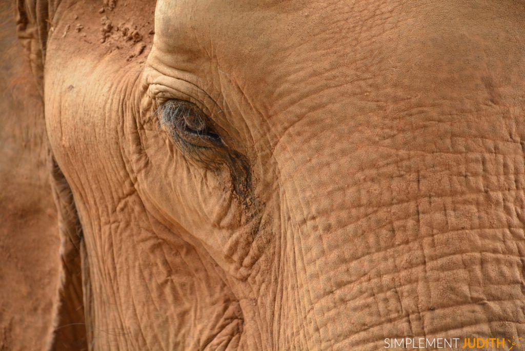 oeil elephant_ENP_Thailande
